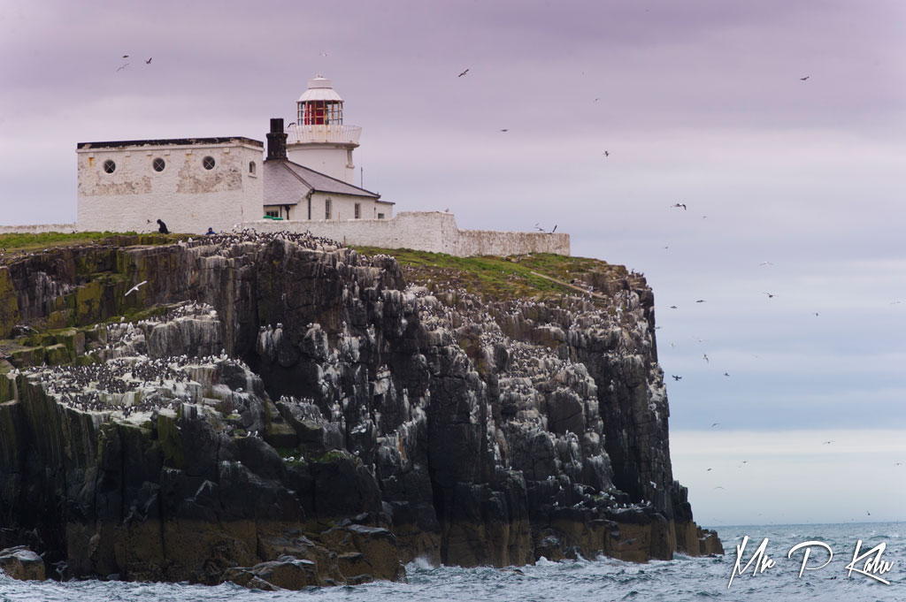 Inner Farne Lighthouse in the Farne Islands