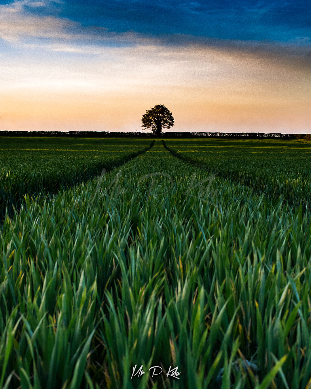 Image of a tree in a Cotswolds Farm at sunset